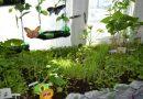 Огород-терапевт на подоконнике позволяет улучшить социальное, физическое и психологическое состояние пожилых людей