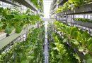 On-line курс «Растения для сити-фермерства»